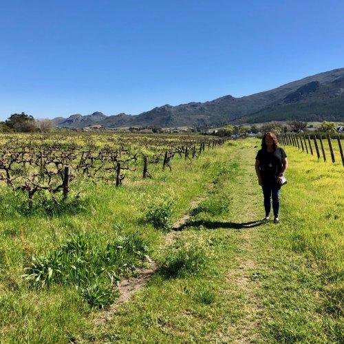 Strolling through the vineyard