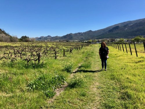 Strolling through the vineyard